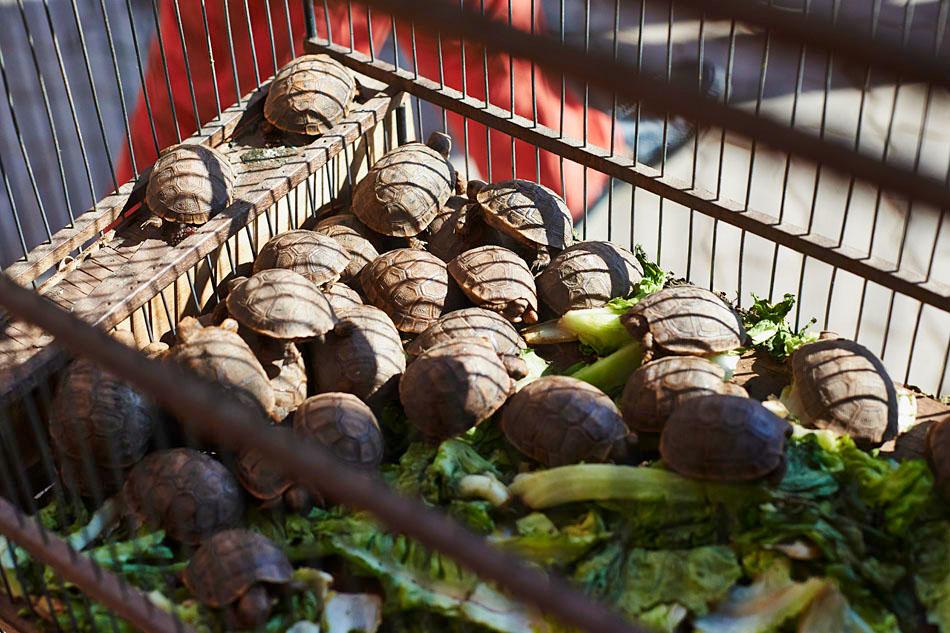 marak17 Egzotyczne Maroko