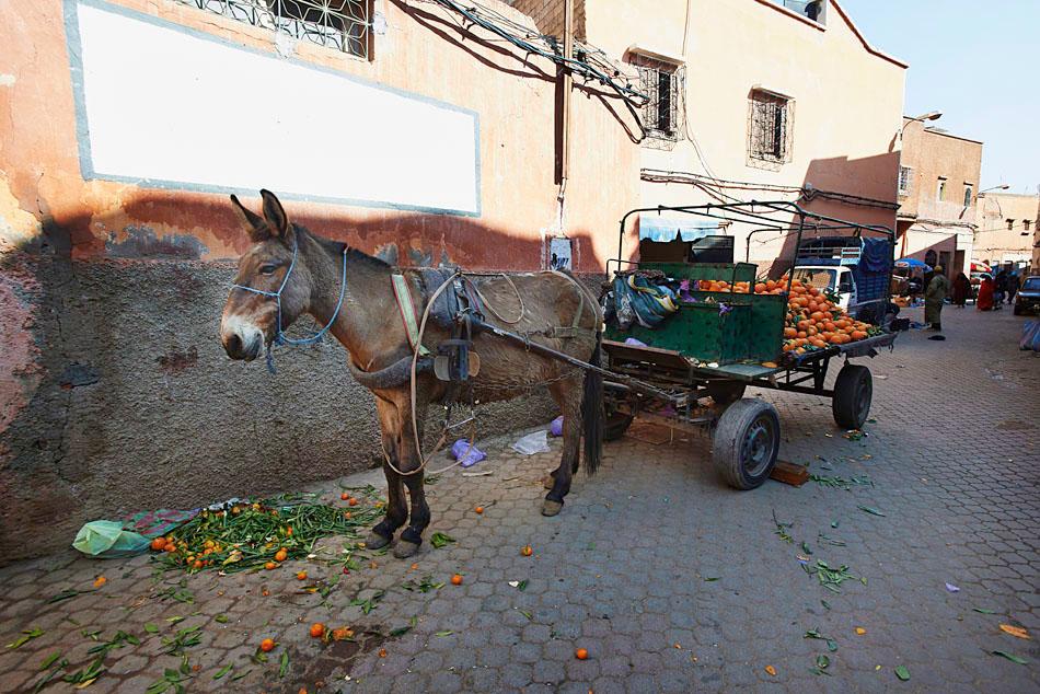 marak27 Egzotyczne Maroko