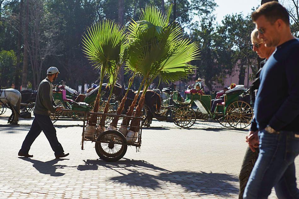 marak60 Egzotyczne Maroko