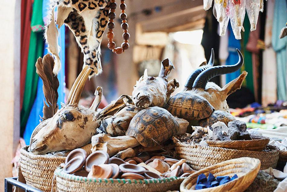 marak67 Egzotyczne Maroko