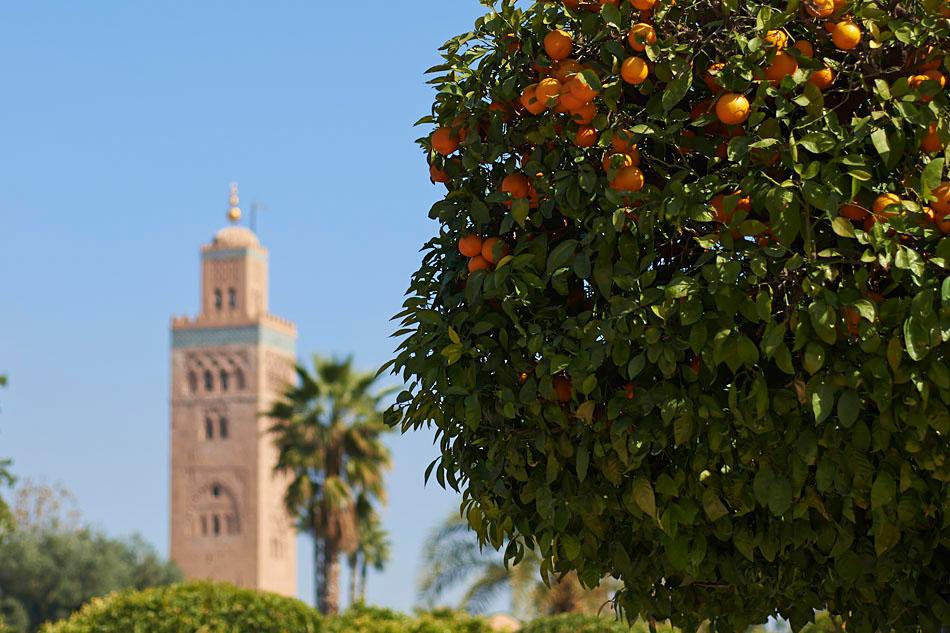 marak72 Egzotyczne Maroko