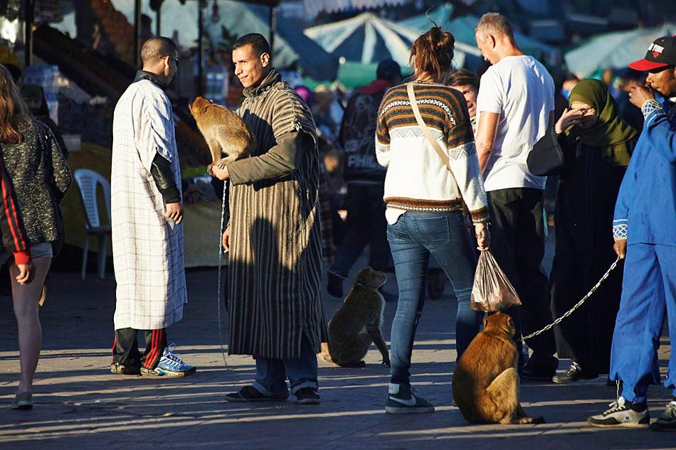 marak83 Egzotyczne Maroko
