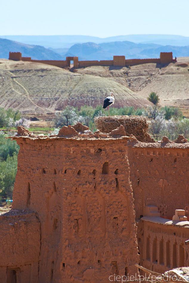 pustynia11 U wrót Sahary