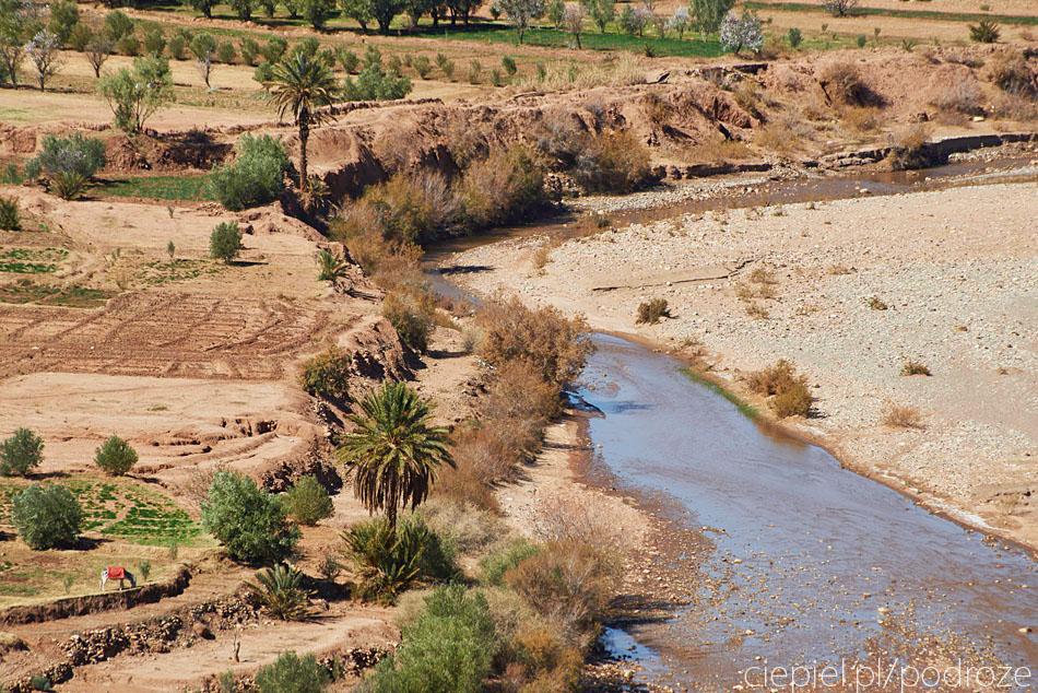 pustynia13 U wrót Sahary