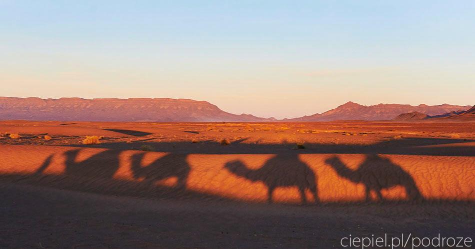 pustynia56 U wrót Sahary