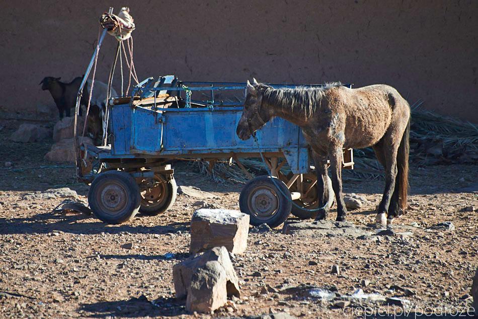 pustynia67 U wrót Sahary