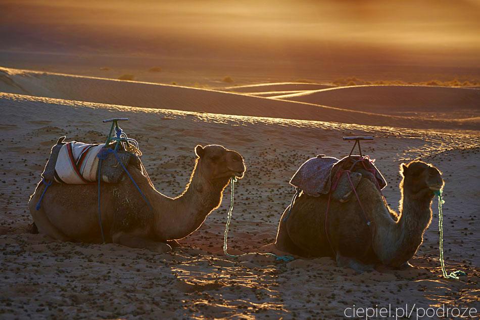 pustynia74 U wrót Sahary