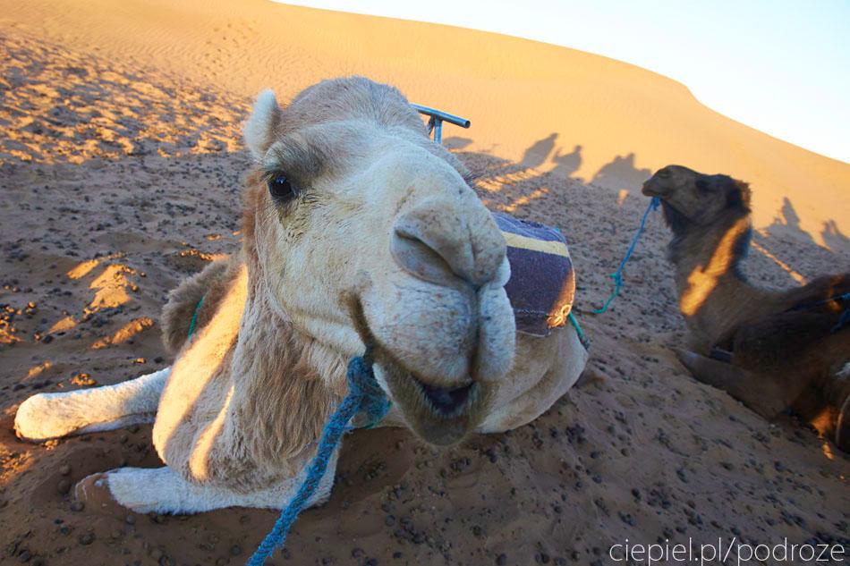 pustynia75 U wrót Sahary