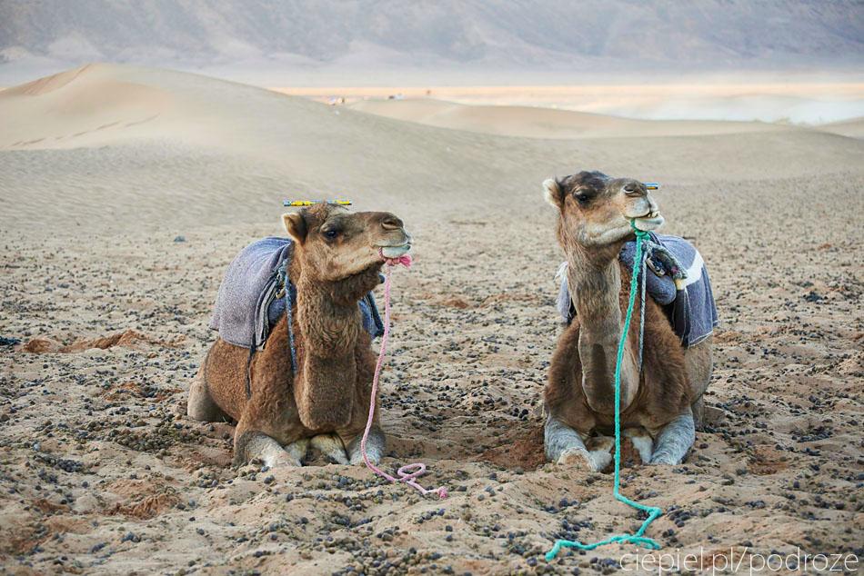 pustynia78 U wrót Sahary