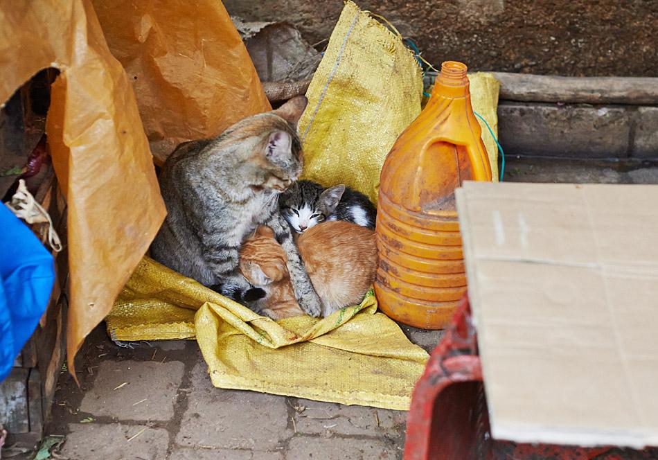 maroko fez zdjecia grzegorz ciepiel 004 Fez   mała podróż w czasie
