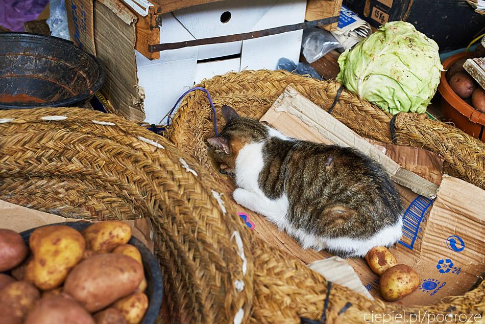 maroko fez zdjecia grzegorz ciepiel 011 Fez   mała podróż w czasie