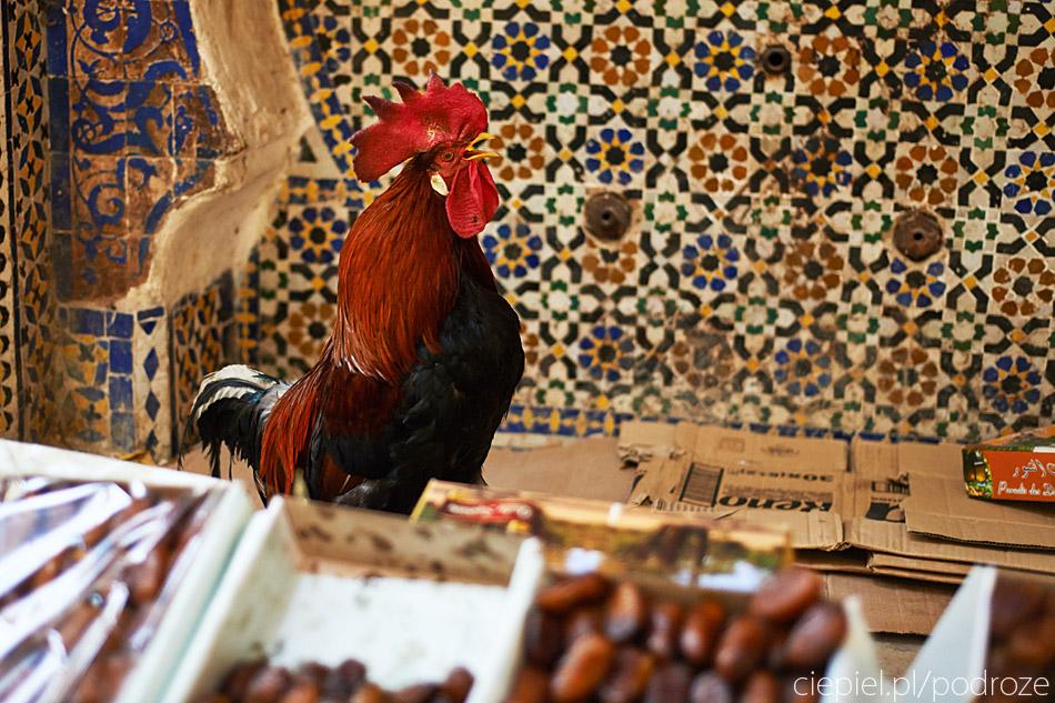 maroko fez zdjecia grzegorz ciepiel 014 Fez   mała podróż w czasie