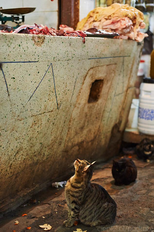 maroko fez zdjecia grzegorz ciepiel 015 Fez   mała podróż w czasie