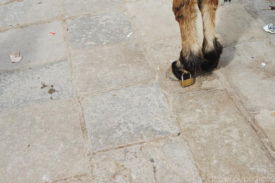 maroko fez zdjecia grzegorz ciepiel 056 Fez   mała podróż w czasie