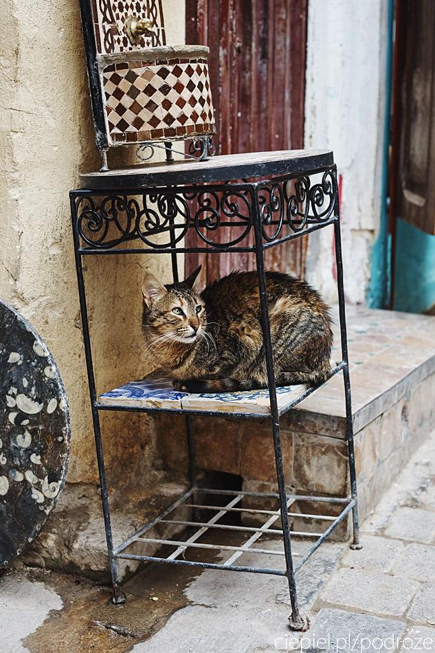 maroko fez zdjecia grzegorz ciepiel 069 Fez   mała podróż w czasie