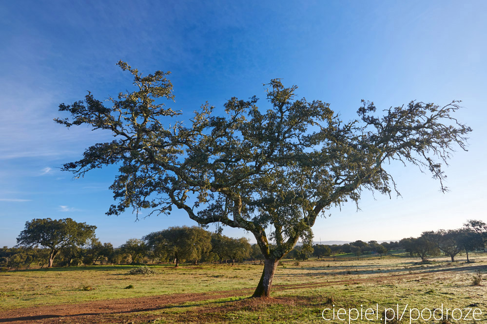 portugalia blog galeria ciepiel fotograf 086 Południowa Portugalia   dalej od oceanu