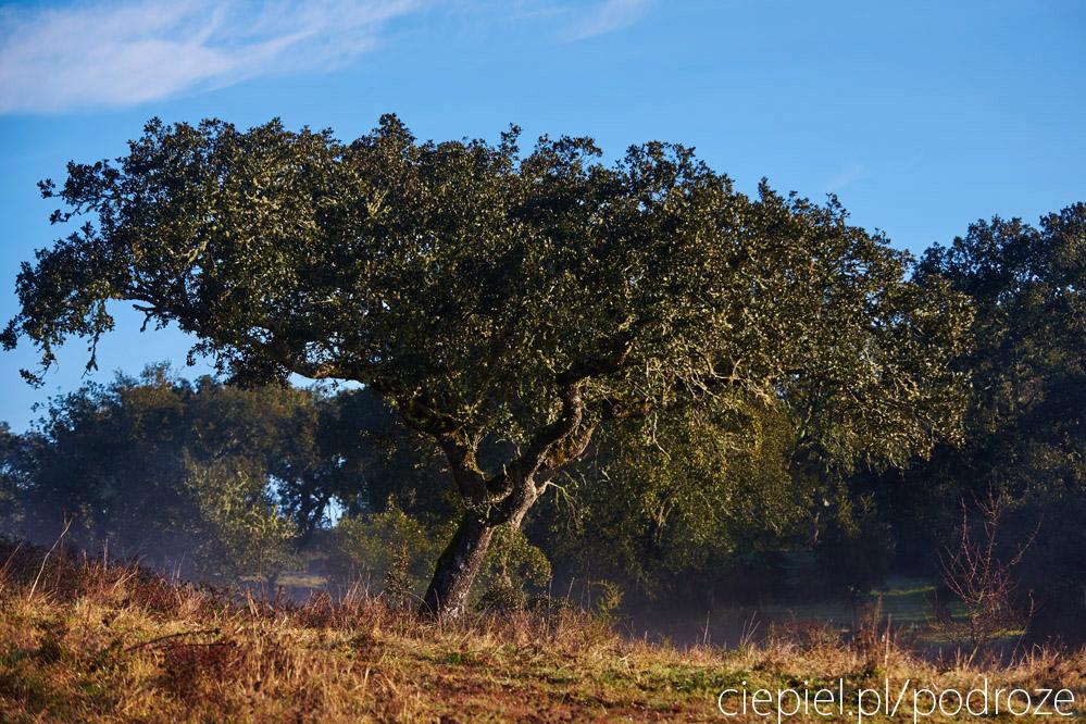 portugalia blog galeria ciepiel fotograf 092 Południowa Portugalia   dalej od oceanu
