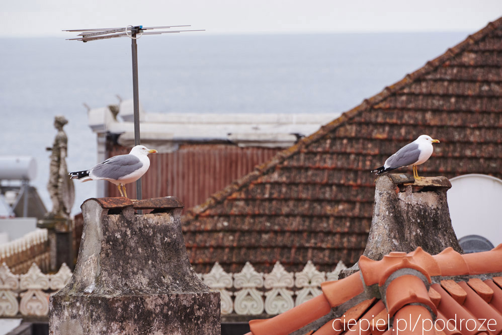 portugalia blog galeria ciepiel fotograf 111 Południowa Portugalia   dalej od oceanu
