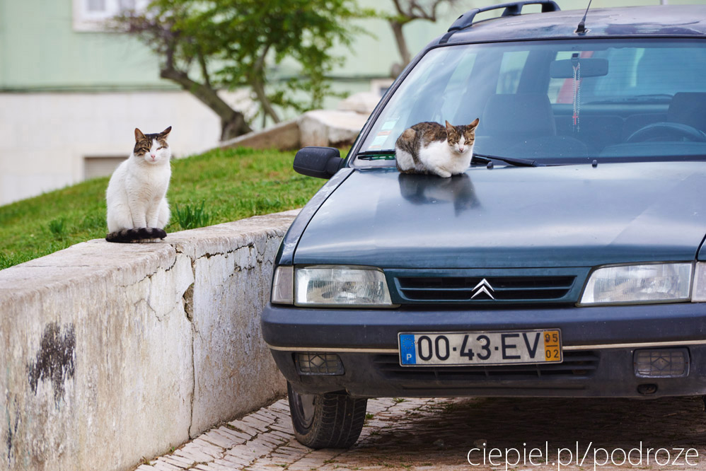 portugalia blog galeria ciepiel fotograf 112 Południowa Portugalia   dalej od oceanu