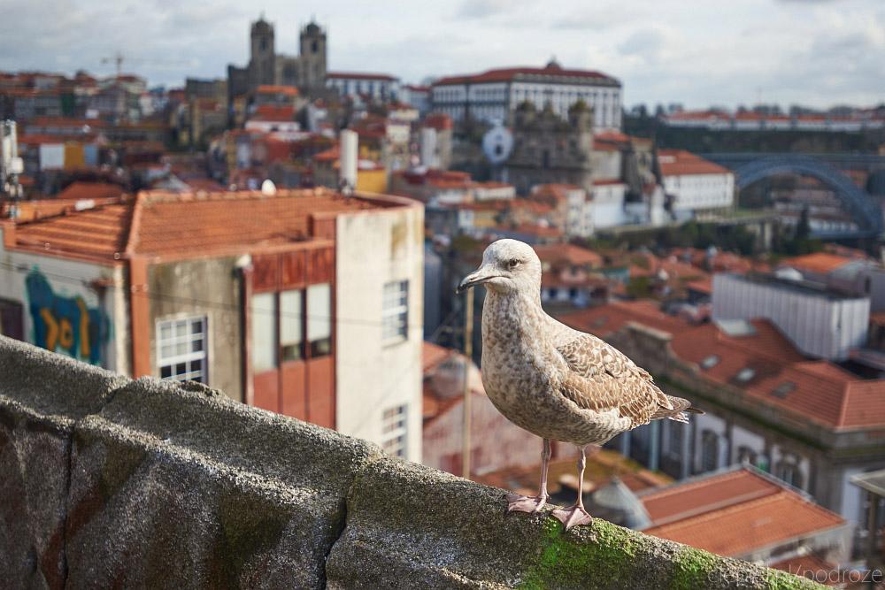ciepiel podroze portugalia blog 176 Od Lizbony do Porto