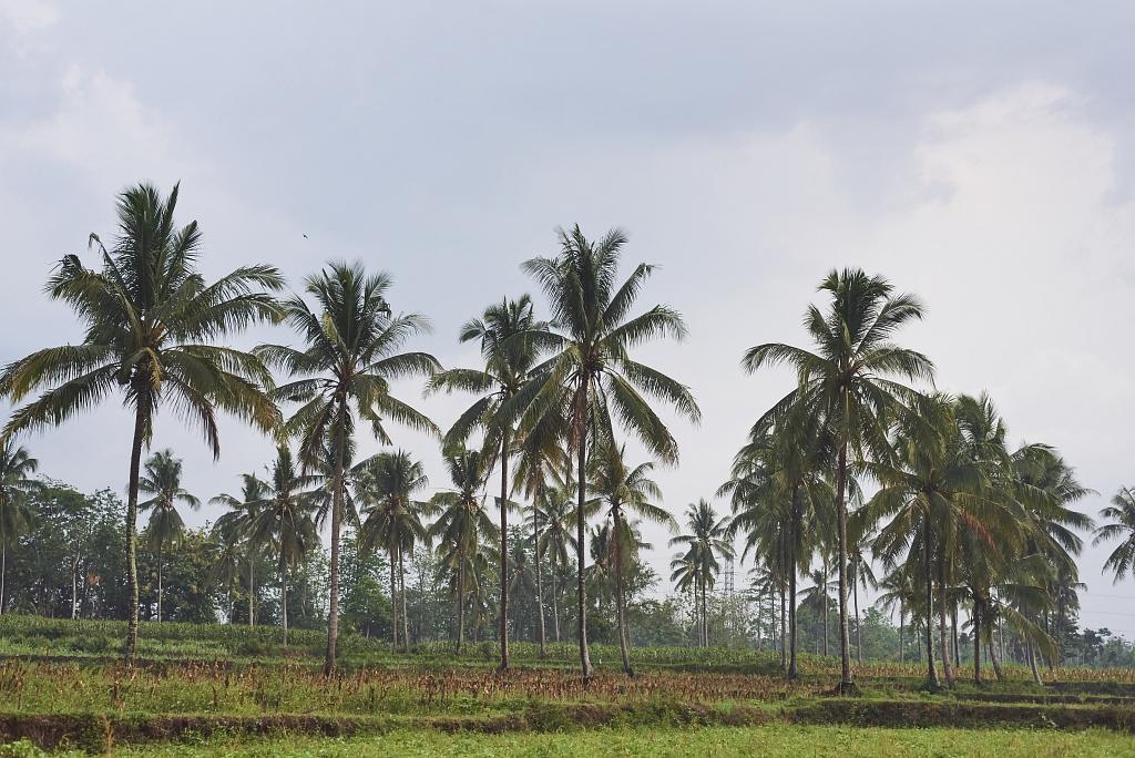 indonezja 0470 W krainie wulkanów