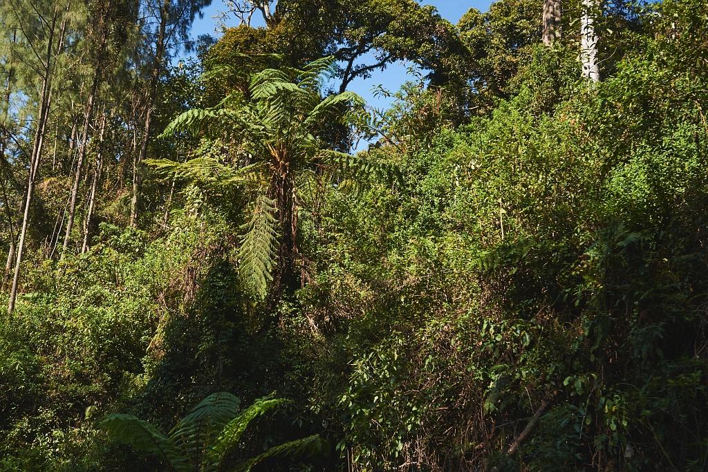 indonezja 0625 W siarkowym piekle   Wulkan Ijen