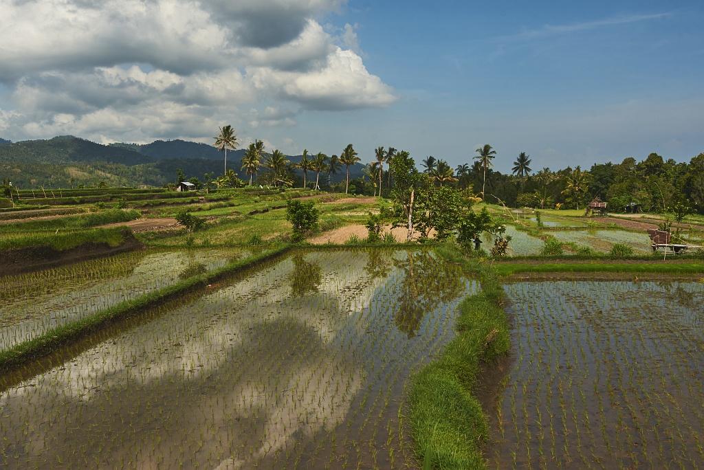 indonezja 0659 Pemuteran, cicha wioska na wyspie Bali