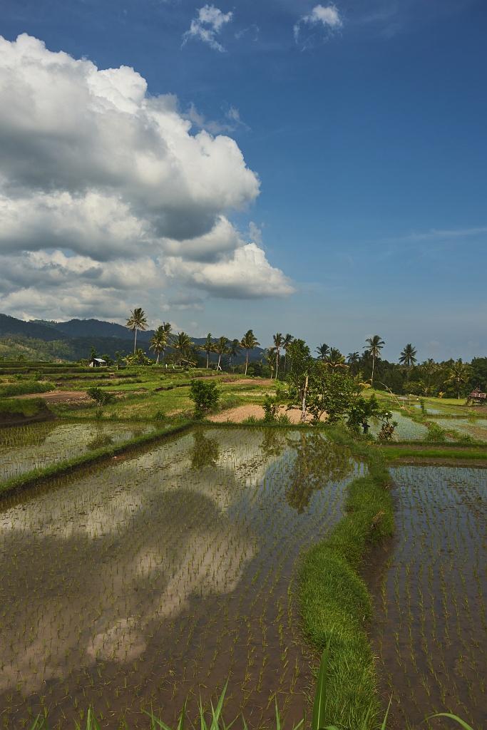 indonezja 0661 Pemuteran, cicha wioska na wyspie Bali