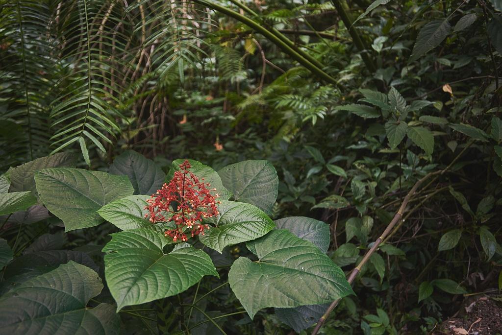 indonezja 0765 Pemuteran, cicha wioska na wyspie Bali