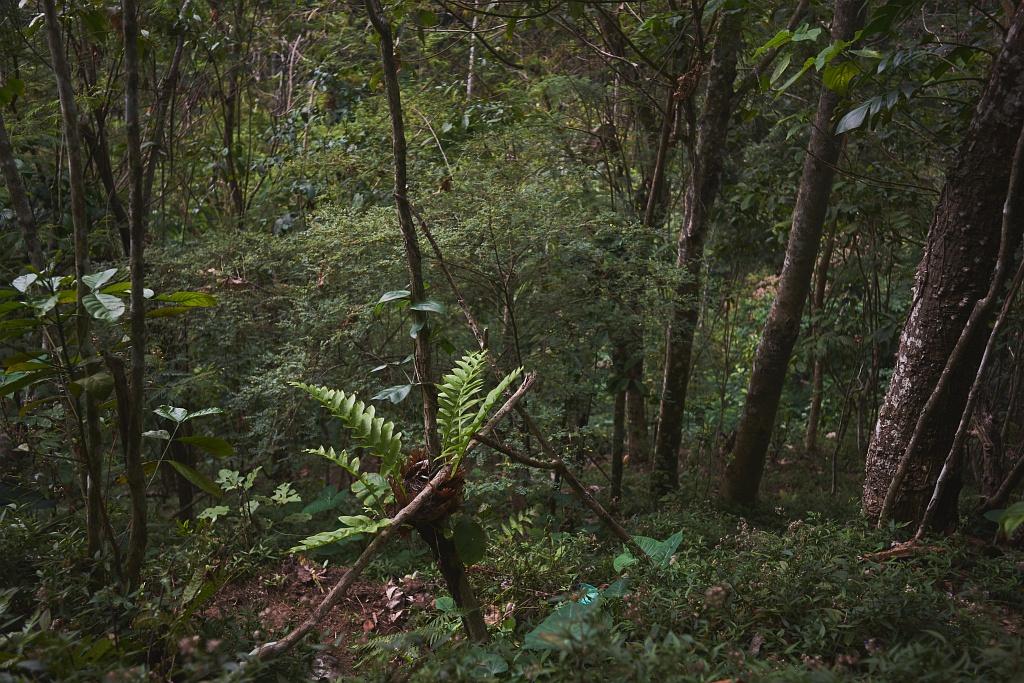 indonezja 0767 Pemuteran, cicha wioska na wyspie Bali