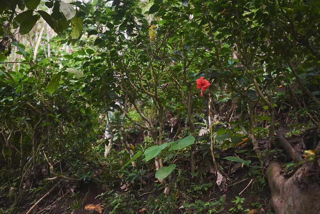 indonezja 0775 Pemuteran, cicha wioska na wyspie Bali