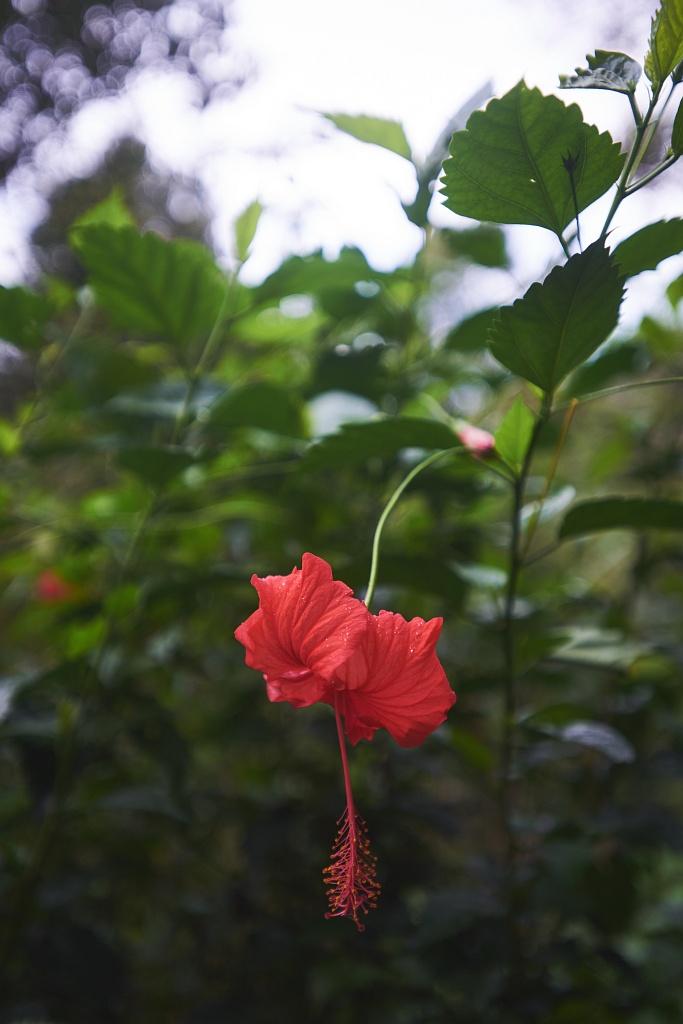indonezja 0777 Pemuteran, cicha wioska na wyspie Bali