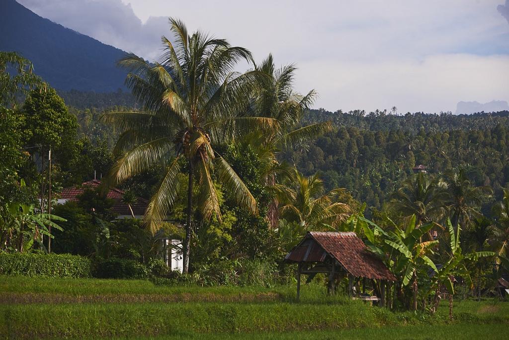 indonezja 0791 Pemuteran, cicha wioska na wyspie Bali