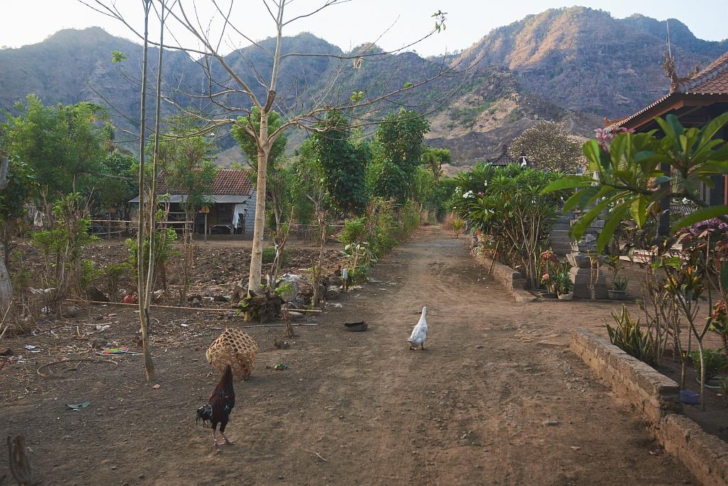 indonezja 0847 Pemuteran, cicha wioska na wyspie Bali