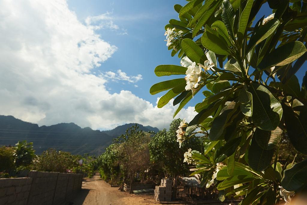 indonezja 0946 Pemuteran, cicha wioska na wyspie Bali