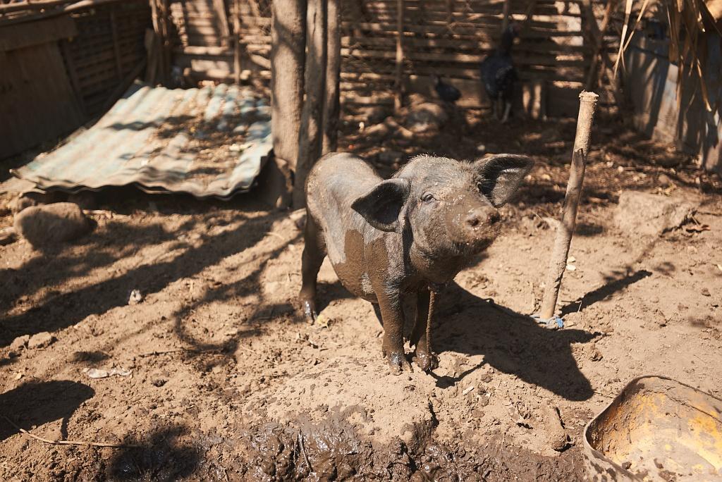 indonezja 0950 Pemuteran, cicha wioska na wyspie Bali